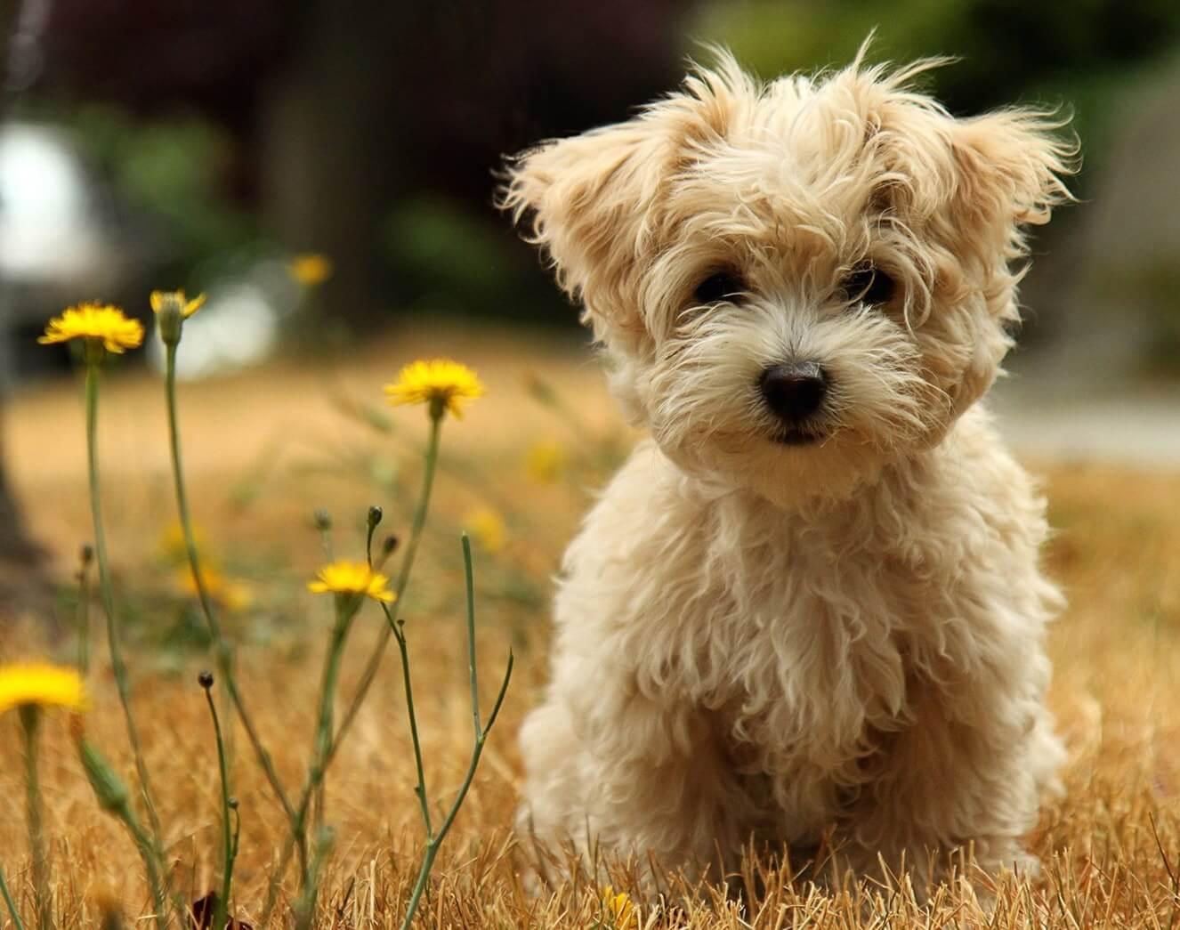 desktop images of a cute puppy dog wallpaper copy min